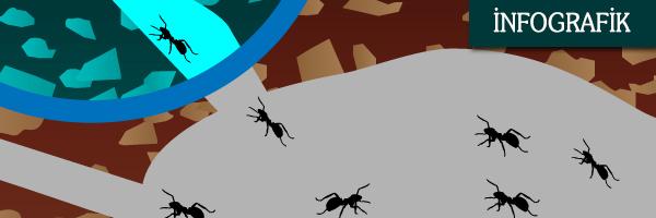 Karıncalardan Öğrenilecek 7 Ders