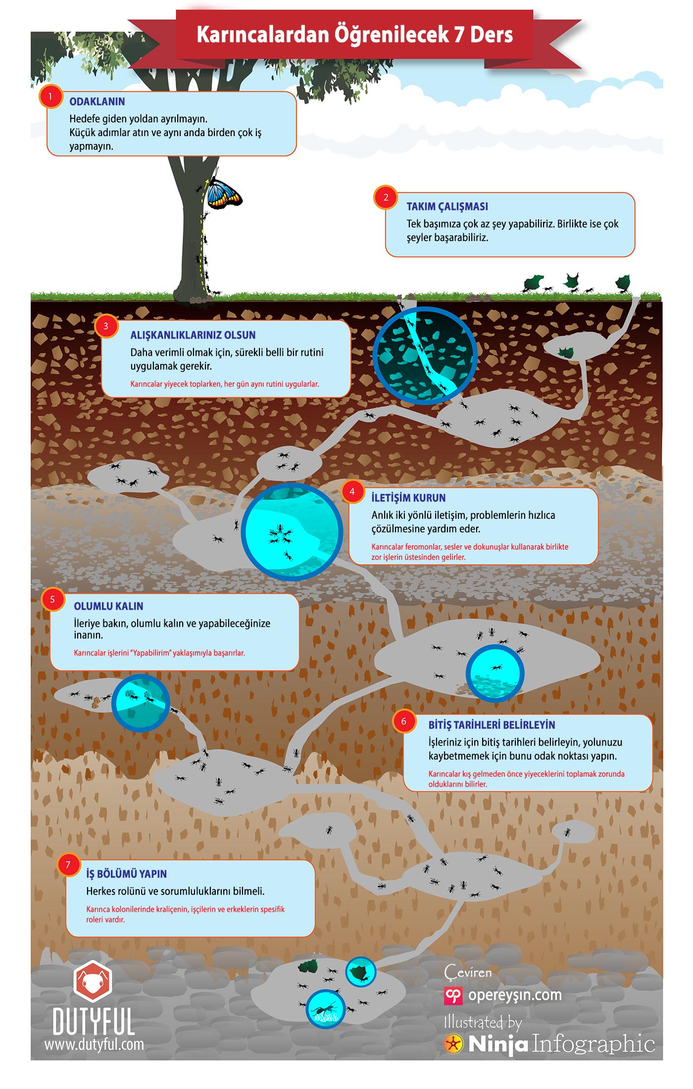 Karıncalardan Öğrenilecek 7 Ders [İNFOGRAFİK]
