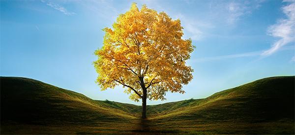 Bir Ağaç, Bir Kelime, Bir Hayat…