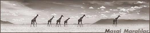 Masai Maralılar