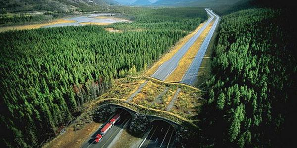 Vahşi Hayatı Kurtaran İnanılmaz Köprüler